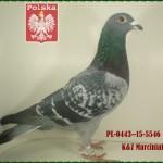 k-z-marciniak-golab