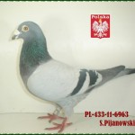 s-pijanowski-golab