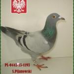 s-pijanowski-golab-2