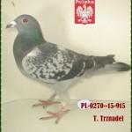 t-trznadel-golab